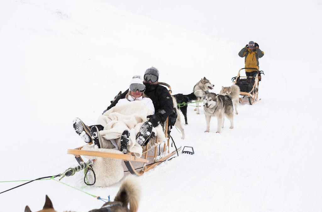 Dog sled trip