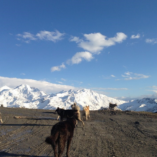 trotinette-husky-dog-verbier-2