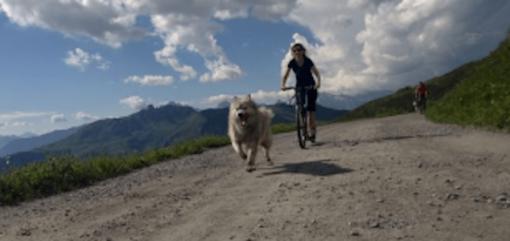 trotinette-husky-dog-verbier-4